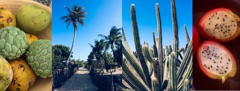 Atta, cactus et pitaya